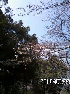 【生存報告】春ですねぇ